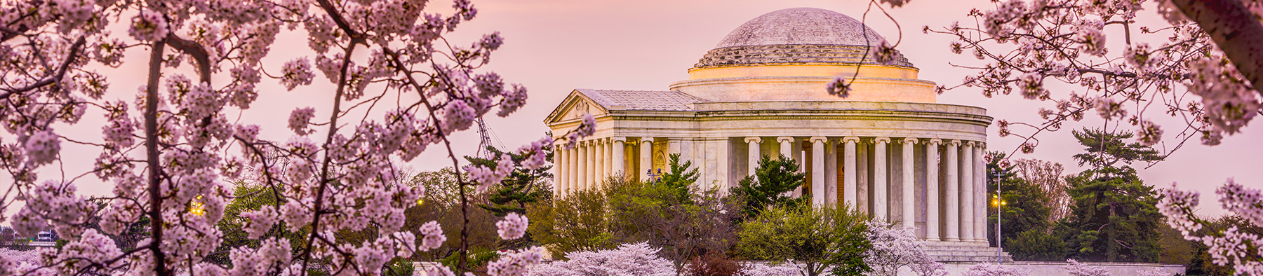 Jefferson Memorial with Cherry Blossoms in Washington DC
