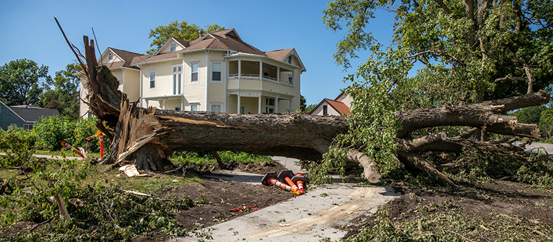 The derecho wreaked havoc on trees of all sizes, including this giant that fell in front of Macy House.