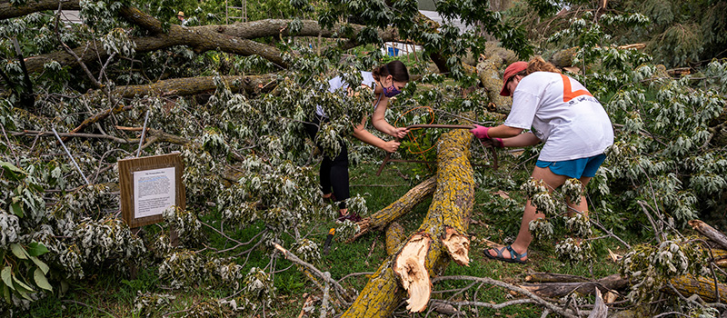 Two volunteers work on sawing a tree that had toppled over on Grinnell's campus.