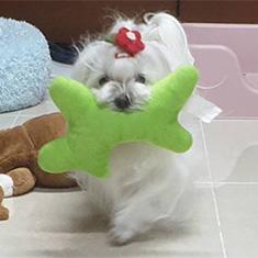 Kevin Kim's dog, Kong