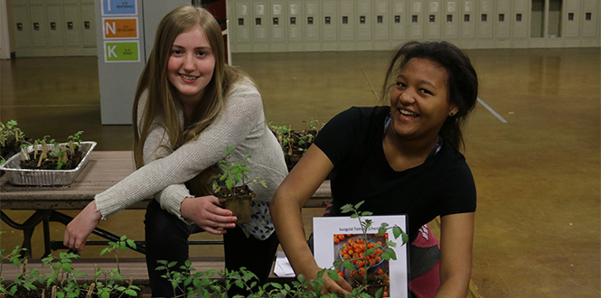 Students look over their tomato plants as part of the program created by Neighbors Nourishing Communities.