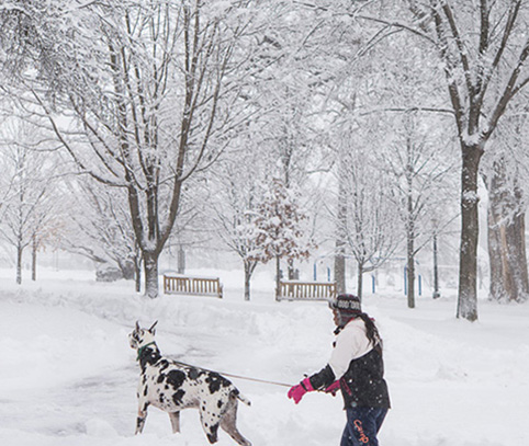 A man takes his dog on a walk through campus during a snowy day.